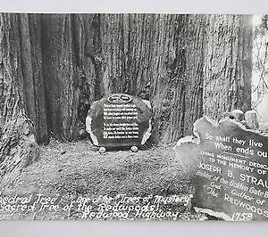 art-ray-rppc-cathedral-tree-redwood-highway