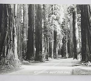 art-ray-rppc-richardson-grove-state-park