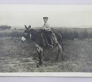 boy-on-a-mule-real-photo-post-card-rppc