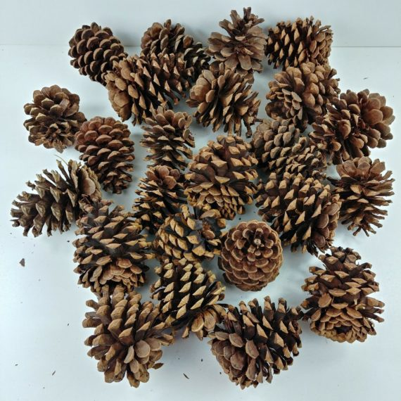 lot-of-24-pine-cones-multiple-size-crafts-christmas-holiday-decorations-01