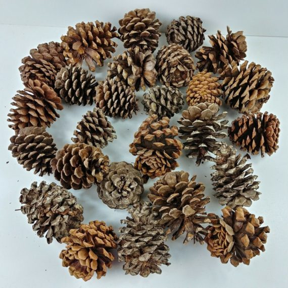 lot-of-26-pine-cones-multiple-size-crafts-christmas-holiday-decorations-05
