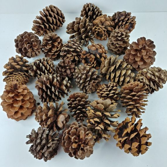 lot-of-27-pine-cones-multiple-size-crafts-christmas-holiday-decorations-03