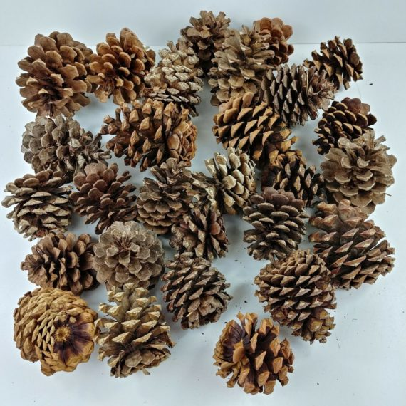 lot-of-28-pine-cones-multiple-size-crafts-christmas-holiday-decorations-04