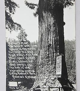 pat-rppc-picture-of-the-world-famous-tree-house-redwood-highway