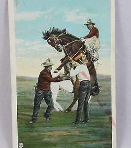cowboy-breaking-a-wild-bucking-broncho-postcard
