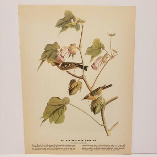 vintage-audubon-bird-print-bay-breasted-warbler-henslows-sparrow