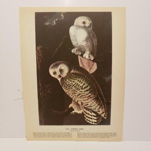 vintage-audubon-bird-print-blue-grosbeak-snowy-owl
