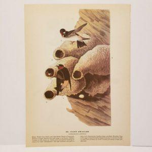 vintage-audubon-bird-print-cliff-swallow-red-wing