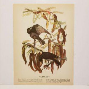 vintage-audubon-bird-print-fish-crow-yellow-palm-warbler